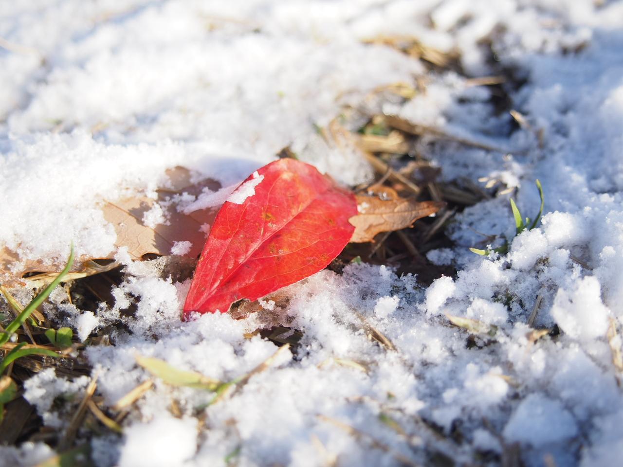 わーい!雪だ!芝生のお山で初滑り