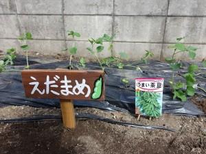 2014_0624ねぶた紙切り・枝豆と0014_R