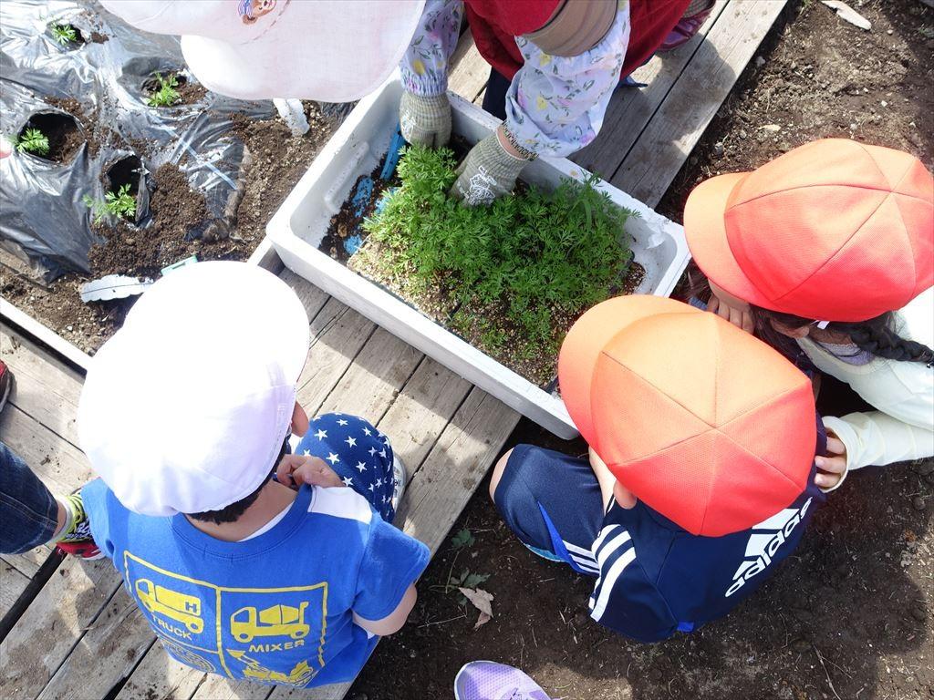 つぼみ農園の野菜、今年は種類が豊富です