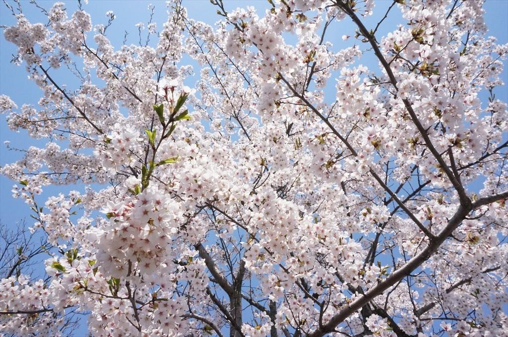 うららかな春…おはながわらった♪
