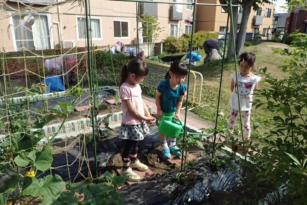 畑の野菜の水やり
