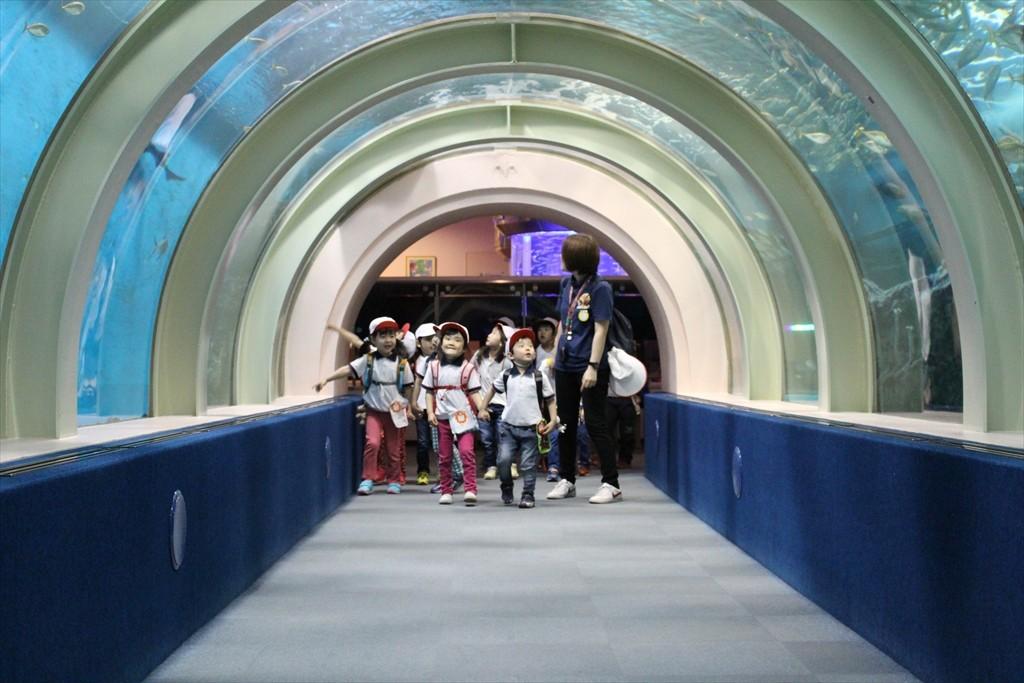 浅虫水族館へバス遠足(ゆり組・ばら組)
